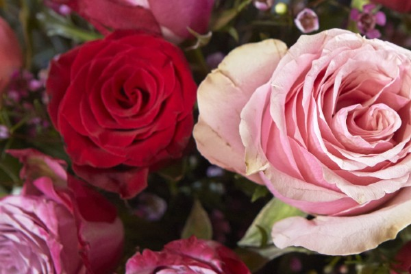 A recent customer survey created by Bloom & Wild reveals that this Valentine's Day 50 per cent of surveyed participants either will or would like to send a brightly coloured bouquet instead of red roses.