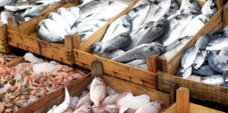 Stop selling fish raised on fishmeal from West Africa, grocers told