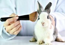 Experts react to the news that the UK could lift the current ban on animal testing within cosmetics and what this could mean.