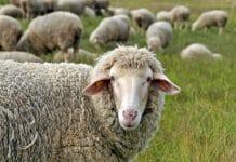 Boohoo wool